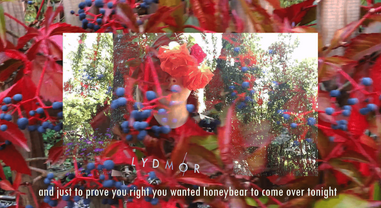 Lydmor: The Gadget Song